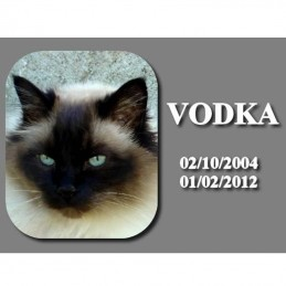 plaque hommage chat